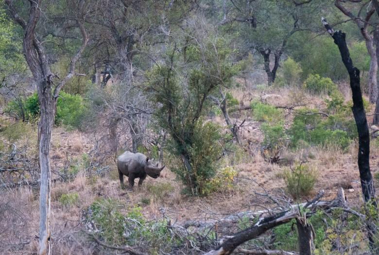 Zuid Afrika Safari Krugerpark